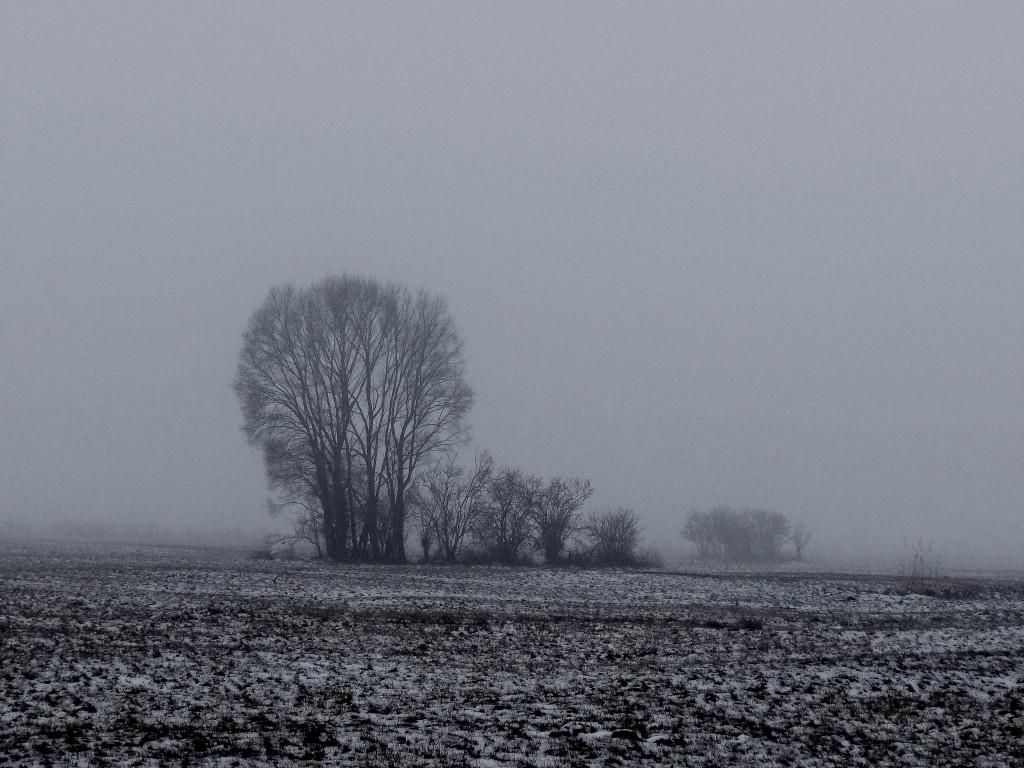 1Gęsta mgła w okolicach Czarnkowa-2