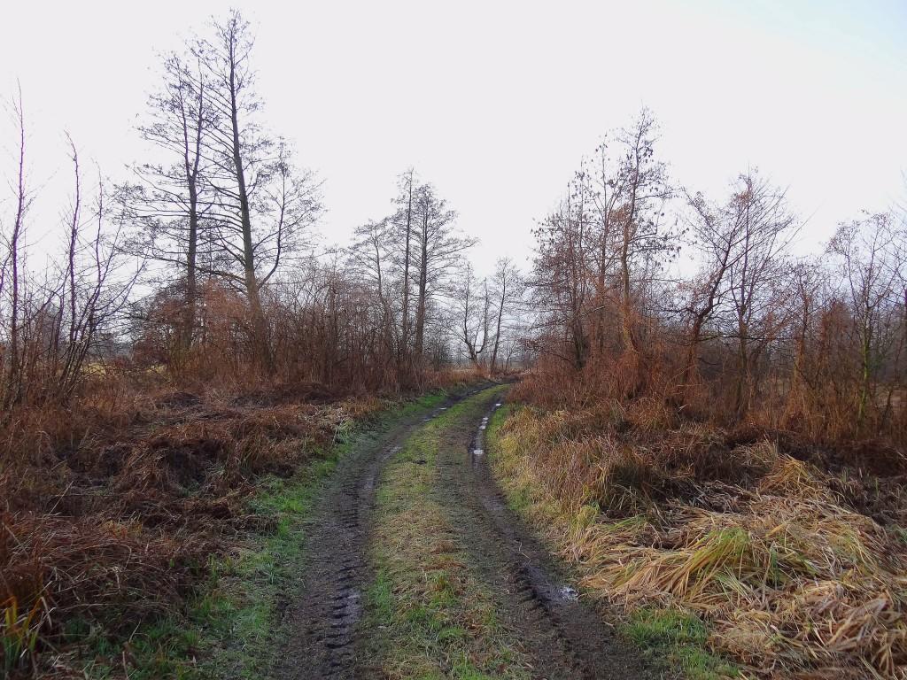 1Polna droga wzdłuż rzeki-2